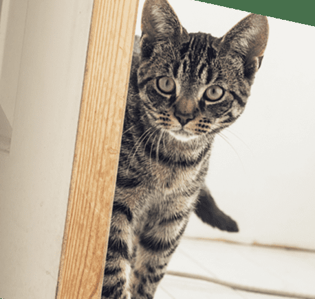 имущественный вычет при покупке квартиры в 2019 кот новосел